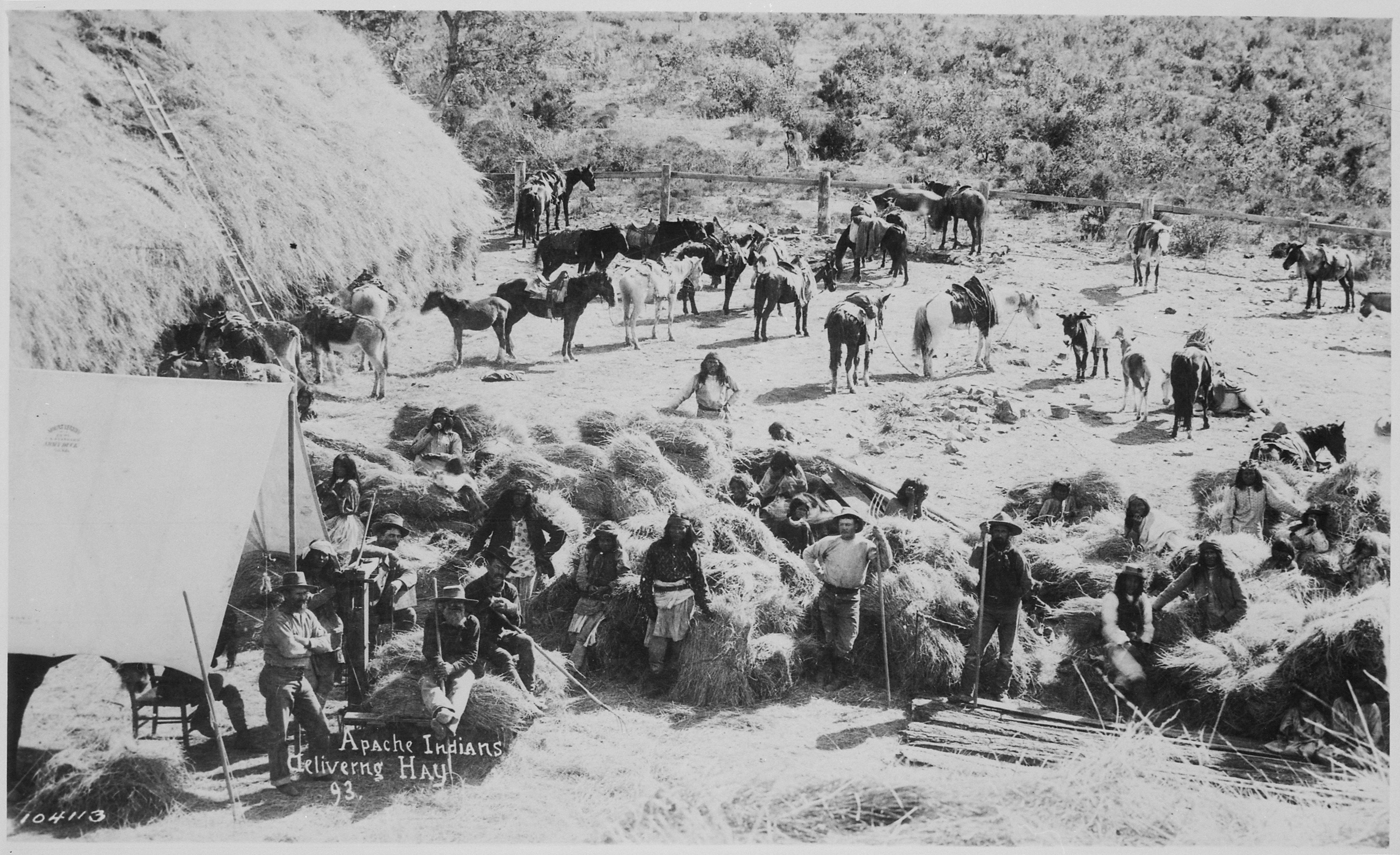 Apaches_delivering_hay_at_Fort_Apache_Arizona_1893