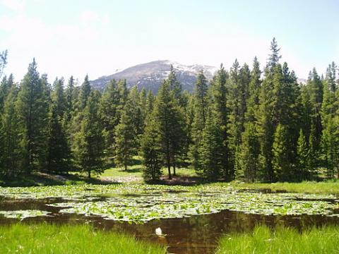 Colorado_USA_Forest