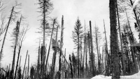 possibilité forestière