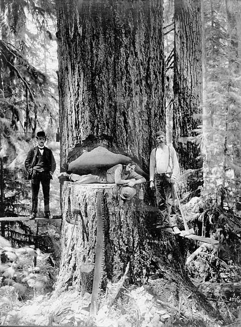Logging_oregon