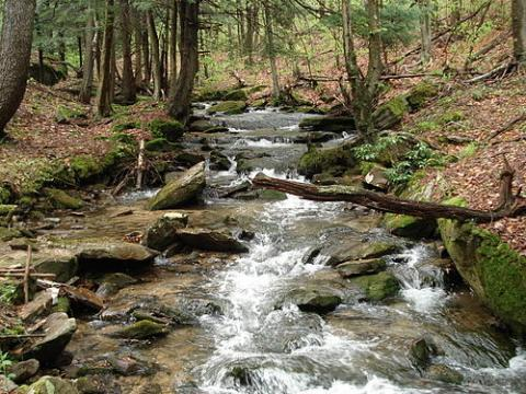 Allegheny_National_Forest
