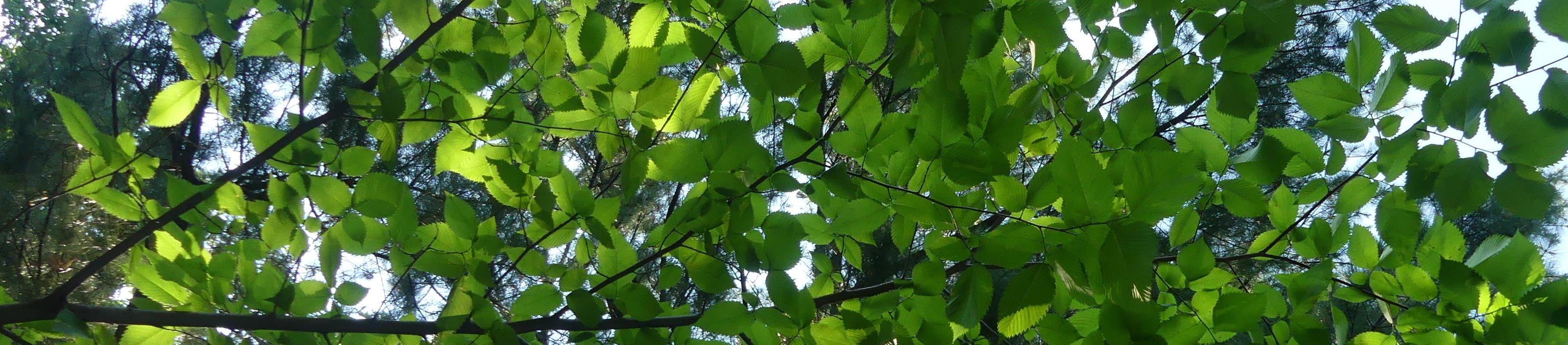 La Forêt à Coeur