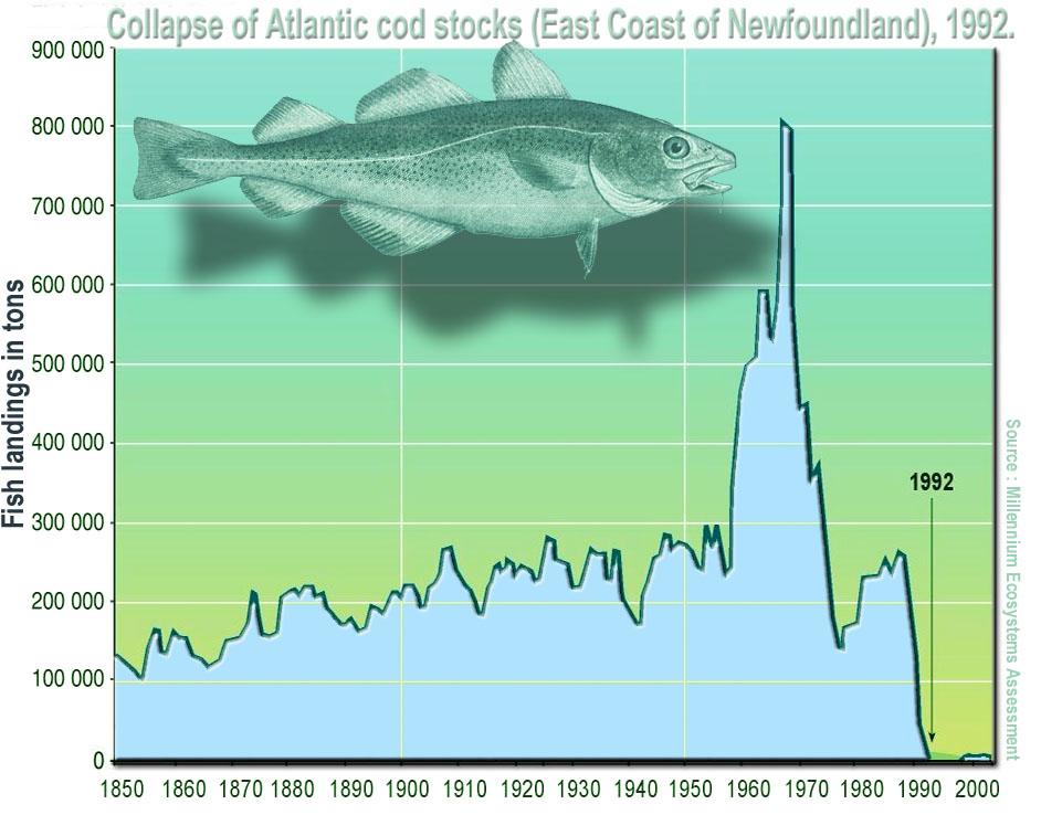 Évolution de la pêche à la morue de l'Atlantique au large de Terre-Neuve